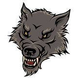 Angry wolf Stock Image