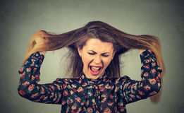 Angry woman pulling her hair out screaming. Very angry woman pulling her hair out screaming Stock Photos