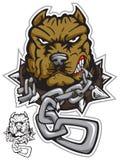 angrydog pit bulla Obraz Stock