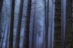 Angstaanjagend bos Stock Afbeelding