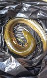 anguila fotos de archivo libres de regalías