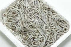 Anguilas crudas del bebé de las anguilas jóvenes en la bandeja plástica aislada en blanco Fotos de archivo libres de regalías