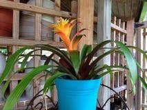 Anguilla blommar växthuset Royaltyfria Bilder