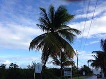 Anguilla Palm. Evening Caribbean Green Stock Photos