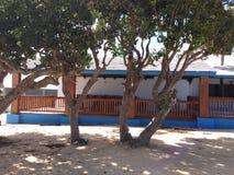 Anguilla retiennent images libres de droits
