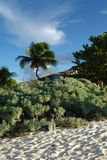 Anguilla. Shoal Bay beach with trees and vegetation Royalty Free Stock Photos