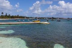 Anguilla Stock Photo