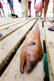 Anguilla su un pilastro Immagini Stock