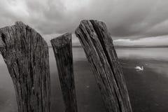 Anguillara pir Royaltyfri Fotografi