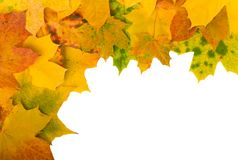 Angular frame of maple leaves Stock Images