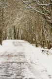 Angular View of Snow Covered Trail in the Woods, No Sky, Daytime royalty free stock images