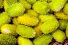 Anguria de Cucumis, cackrey, concombre marron, cornichon indien occidental et courge indienne occidentale Deco-fruits jaunes et c photo stock