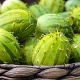 Anguria de Cucumis, cackrey, concombre marron, cornichon indien occidental et courge indienne occidentale Deco-fruits jaunes et c photo libre de droits