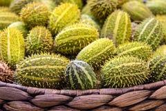 Anguria de Cucumis, cackrey, concombre marron, cornichon indien occidental et courge indienne occidentale Deco-fruits jaunes et c photos libres de droits