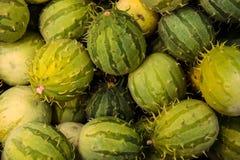 Anguria de Cucumis, cackrey, concombre marron, cornichon indien occidental et courge indienne occidentale Deco-fruits jaunes et c images stock