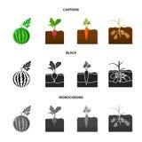 Anguria, ravanello, carote, patate E illustrazione di stock