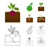 Anguria, ravanello, carote, patate Icone stabilite della raccolta della pianta nel fumetto, azione di simbolo di vettore di stile illustrazione vettoriale