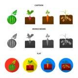 Anguria, ravanello, carote, patate Icone stabilite della raccolta della pianta nel fumetto, azione piane e monocromatiche di simb illustrazione di stock