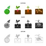 Anguria, ravanello, carote, patate Icone stabilite della raccolta della pianta nel fumetto, il nero, azione di simbolo di vettore illustrazione vettoriale