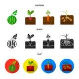 Anguria, ravanello, carote, patate Icone stabilite della raccolta della pianta nel fumetto, il nero, azione piane di simbolo di v illustrazione di stock