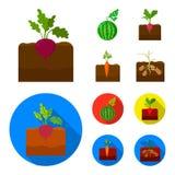 Anguria, ravanello, carote, patate Icone stabilite della raccolta della pianta nel fumetto, illustrazione piana delle azione di s illustrazione vettoriale