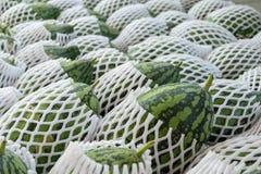 Anguria verde immagine stock