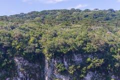Angustifolia αροκαριών στο φαράγγι Itaimbezinho Στοκ Φωτογραφία