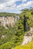 Angustifolia αροκαριών στο φαράγγι Itaimbezinho Στοκ Φωτογραφίες