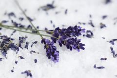 Angustifolia aromatico/de /Lavandula de la lavanda Foto de archivo libre de regalías