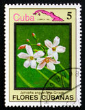Angustifolia Jatropha, serie λουλούδια της Κούβας, circa 1983 Στοκ Εικόνες
