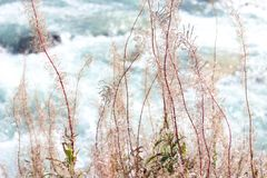 Angustifolium Chamaenerion Salgueiro-erva Switzerland, alpes foto de stock