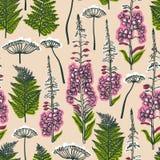 Angustifolium Epilobium, Angelica, Polypodiophyta Άνευ ραφής σχέδιο με το δάσος και τις εγκαταστάσεις και τα λουλούδια τομέων Ang ελεύθερη απεικόνιση δικαιώματος