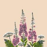 Angustifolium Epilobium, Angelica, Polypodiophyta Κάρτα με τις εγκαταστάσεις δασών και λιβαδιών Η Angelica, φτέρη, Ανθίζοντας φυτ διανυσματική απεικόνιση