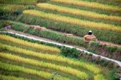 Anhäufung-Reis Lizenzfreies Stockfoto