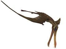 Anhanguera - Dinosaurier 3D lizenzfreie abbildung