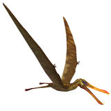 Anhanguera Pterosaur Royalty Free Stock Photo