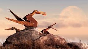 Anhanguerii Pteranodons foto de archivo libre de regalías