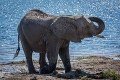 Anhebender Stamm des Elefanten neben Fluss im Sonnenschein Lizenzfreie Stockbilder
