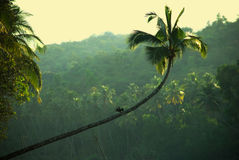 Anhinga In A Jungle Stock Photo