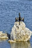 Anhinga jäkelfågeln royaltyfria foton