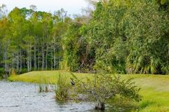 anhinga perched in tree Stock Photos