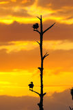 Anhinga Sunset Stock Photos