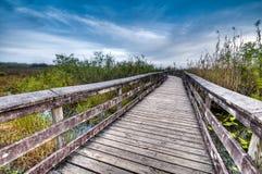 Free Anhinga Trail Royalty Free Stock Photo - 12799605