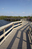 Anhinga trail boardwalk royalty free stock images