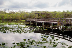 The Anhinga Trail. Boardwalk on the Anhinga Trail in the Everglades National Park early in the morning before the visitors arrive Stock Photos