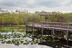 The Anhinga Trail. Boardwalk on the Anhinga Trail in the Everglades National Park early in the morning before the visitors arrive Royalty Free Stock Images