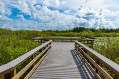 Anhinga Trail of the Everglades National Park. Boardwalks in the swamp. Florida, USA royalty free stock photo