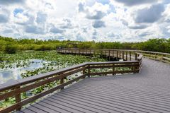 Anhinga Trail of the Everglades National Park. Boardwalks in the swamp. Florida, USA stock images