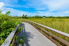 Anhinga Trail of the Everglades National Park. Boardwalks in the swamp. Florida, USA stock photography