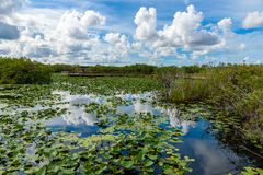 Anhinga Trail of the Everglades National Park. Boardwalks in the swamp. Florida, USA stock photos